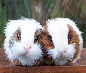Hansa Stuffed Plush Guinea Pigs